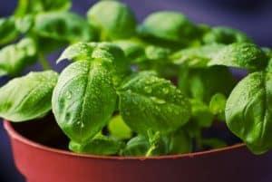 aquaponics planten