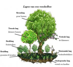 Lagen van een voedselbos